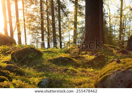 Natural forest at sunset - stock photo