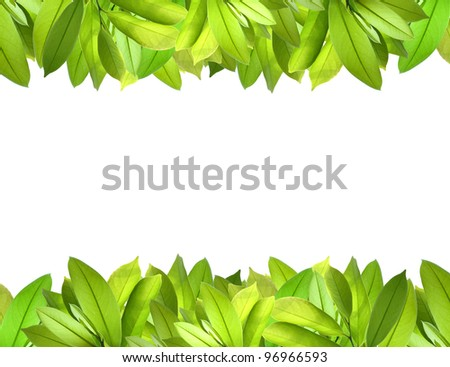 Natural fresh leaves border - stock photo