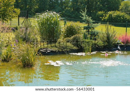 Natural garden with pond - stock photo