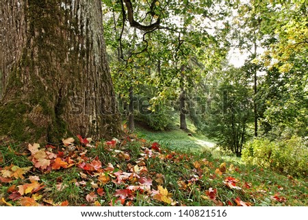 Natural glade at the big oak-tree. - stock photo
