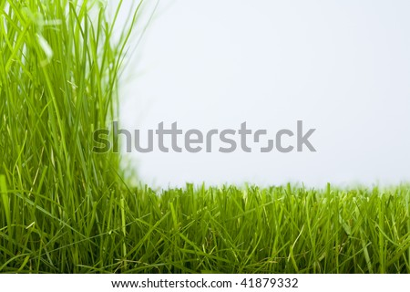 Natural grass and the cut off grass - stock photo