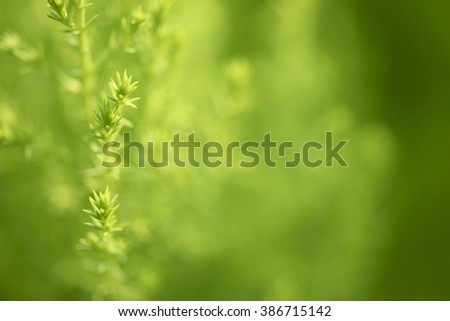 Natural green background, the bokeh effect