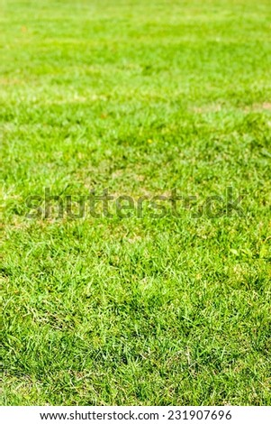 Natural green grass field texture in bright sunlight early fall. - stock photo