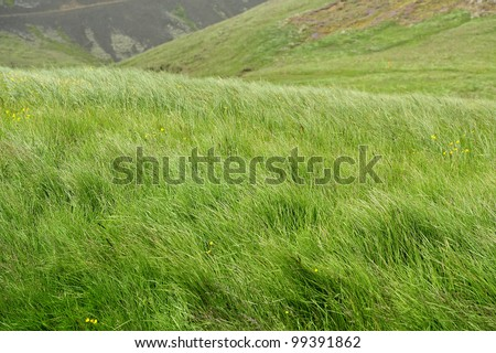natural wood meadow grass - photo #40