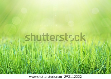 natural green grass with green bokeh and sunlight background  - stock photo