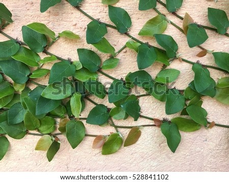 Crawler plant stock images royalty free images vectors for Green floor plant