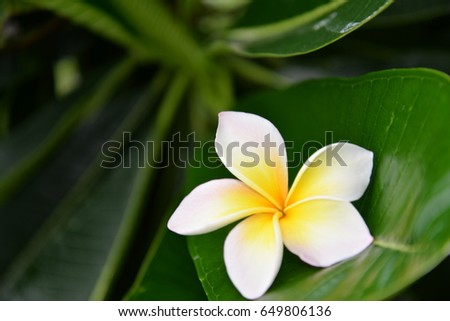 Natural green leaf color background with pretty flower decoration on the surface
