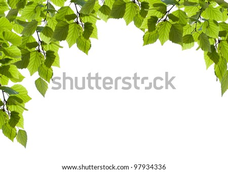 Natural green leaves isolated on white background - stock photo