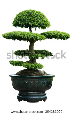 natural green tree and flora inside ceramic pot