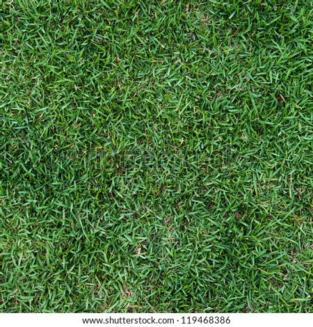 natural green trimmed grass field background for sports. - stock photo