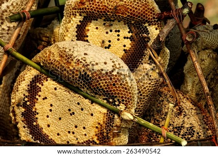 natural honeycomb for sell - stock photo
