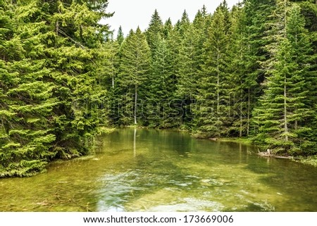Natural landscape - lake and green forest background - stock photo