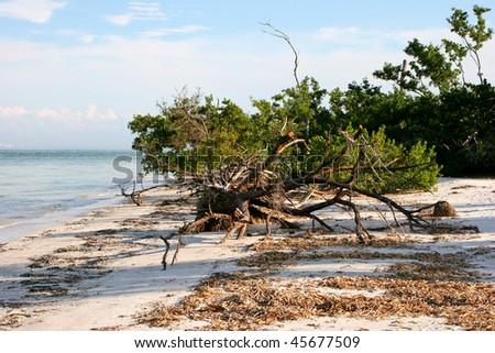 natural landscape view beach Sanibel Island Florida - stock photo