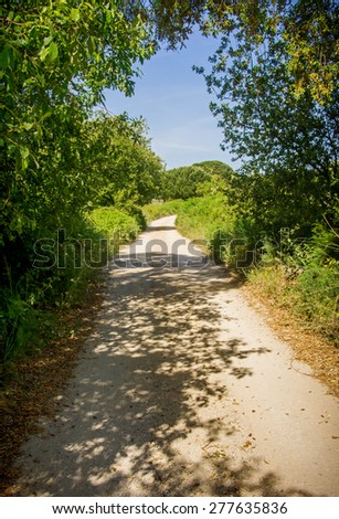 Natural landscape with foot trail through the woods - stock photo