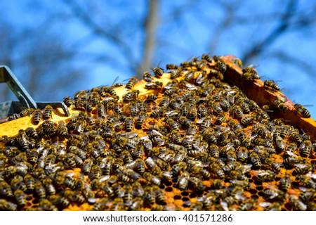 Natural macro detail inside honey bee hive - stock photo
