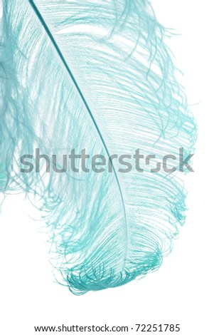 natural ostrich feather dyed blue, isolated on white background