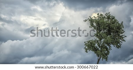 Natural panoramic background of cloudy grey gloomy sky with cumulus in windy cold unpleasant weather and one tree with green leaves on wind copyspace, horizontal picture - stock photo