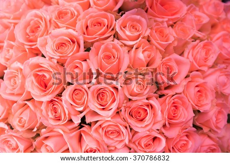 Natural pink roses background - stock photo