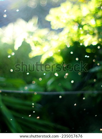 natural plant tree elements under sunlight and nice colorful bokeh of flying white small insects for relaxing happiness joyful background - stock photo