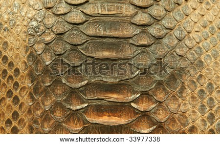 Natural python skin - stock photo