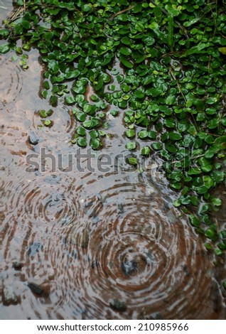 natural rain water dropping on water surface on the brown ground cover with water and tiny small round green grass leaves outdoor with reflections on water surface - stock photo
