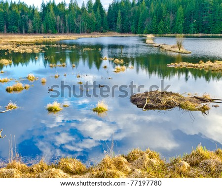 natural reflections on a lake and beautiful yellow marsh - stock photo