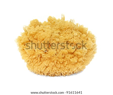 Natural sponge on white background. - stock photo