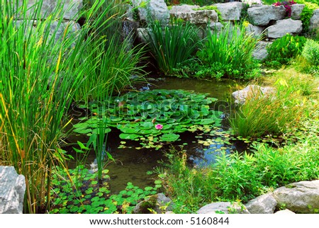 Koi fish natural stone pond stock photo 2544326 shutterstock for Natural pond plants