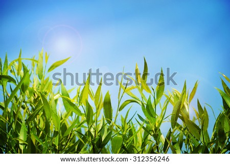 Natural summer background with green lush grass and blue sky - stock photo