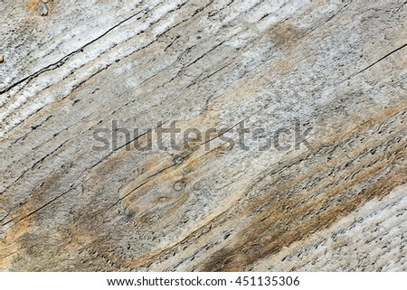 Natural texture of wood in the forest background
