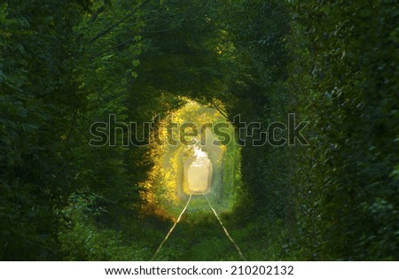 Natural tunnel formed by trees in Romania.  - stock photo