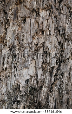 Natural Weathered Grey Taupe Brown Cut Tree Stump Texture, Large Vertical Detailed Wounded Damaged Vandalized Gray Lumber Background Wood Macro Closeup, Dark Black Textured Cracked Wooden Pattern