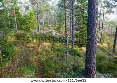 Natural wild forest in morning light, Sweden, Scandinavia - stock photo