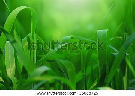 Nature - stock photo