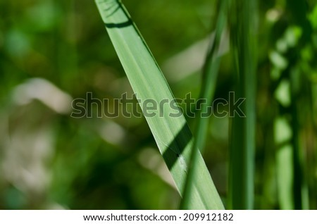 Nature Abstract - Blade of Grass