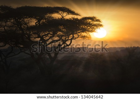 nature at the sunset or sunrise - stock photo