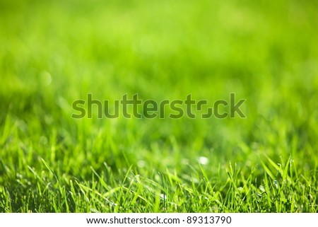 Nature background: green luscious grass. - stock photo