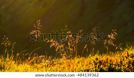 nature background, high resolution, panoramic, sunlight, grass in the mountains, detail, close-up