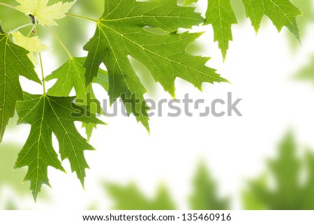 Nature background leaves border