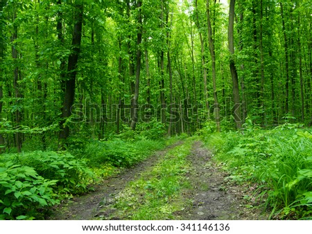 Nature background of green forest