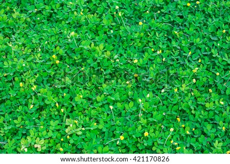 Nature background of Green leave and yellow flower  - stock photo