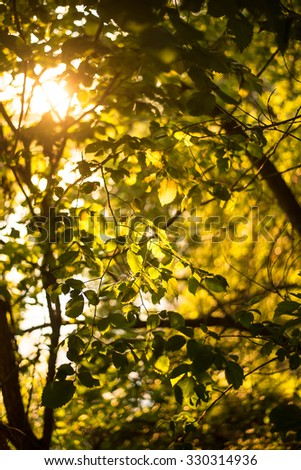 Nature background Photo sheet at sunset close up in warm colours macro bokeh Close up Leaf Backlit Silhouette Sun rays light between branches Empty space for inscription or other objects