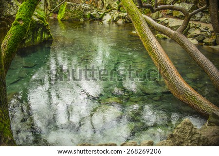 Nature background rain drop splash on clear water texture with stones Trees with green moss on wet trunk above pond Wet Stones around reservoir Bad weather idea symbol - stock photo