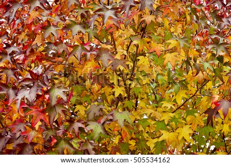 Nature background with bright autumn leaves