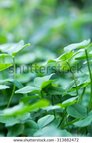 nature background with clover leaves with soft blur effect - stock photo