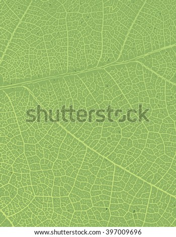 Nature background with free space for text or image. Green leaf veins texture on the toned recycled paper texture.  - stock photo