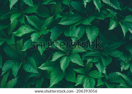 Nature background with ivy green leaves. Ecology. Vintage instagram effect.  - stock photo