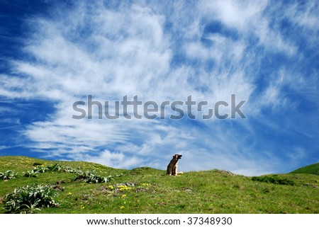 nature background with lonely dog