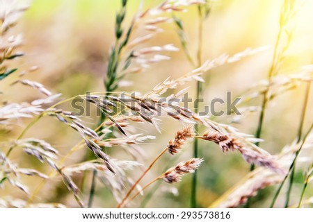 Nature background with wild grass - stock photo