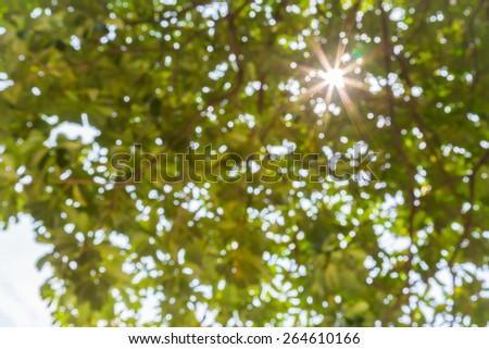 nature bokeh background with sun beam with tree leaves in defocus - stock photo